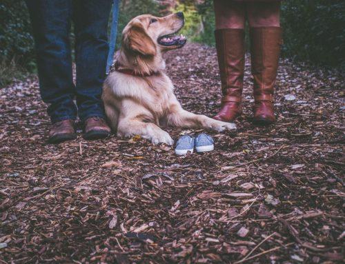 """Pauschale """"Was für ein Hundeleben-Wellness für Hund & Frauchen/Herrchen"""""""