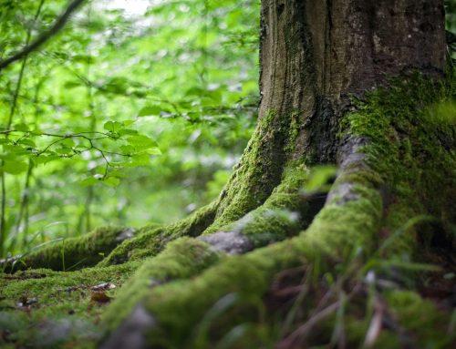 """Pauschale """"Wo Elfen und Waldgeister träumen"""""""
