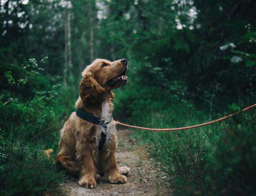 "Pauschale ""Doggy Days – 4 Nächte"""