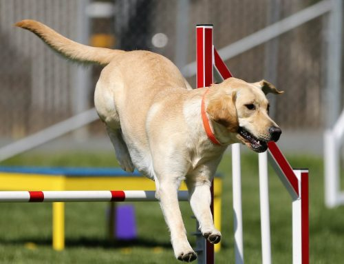 """Agility Workshop-Ferienwoche"""